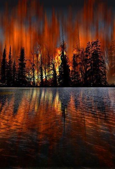 reflection,tree,evening,night,sunset,