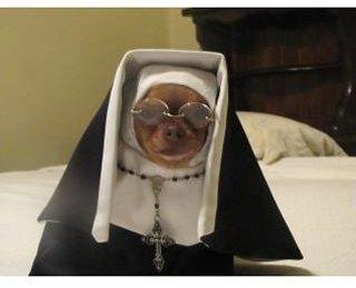 Doggy Nun