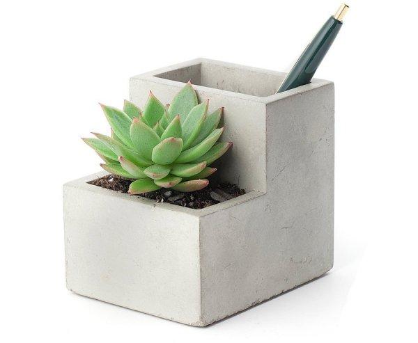 plant, land plant, flower, flowerpot, flowering plant,