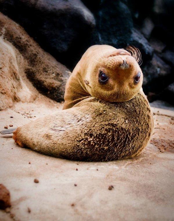 mammal,vertebrate,seals,fauna,wildlife,