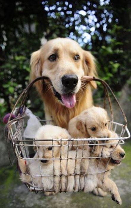 Enjoy Some Puppy Love