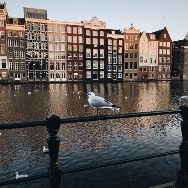 Amsterdam, reflection, water, urban area, city,