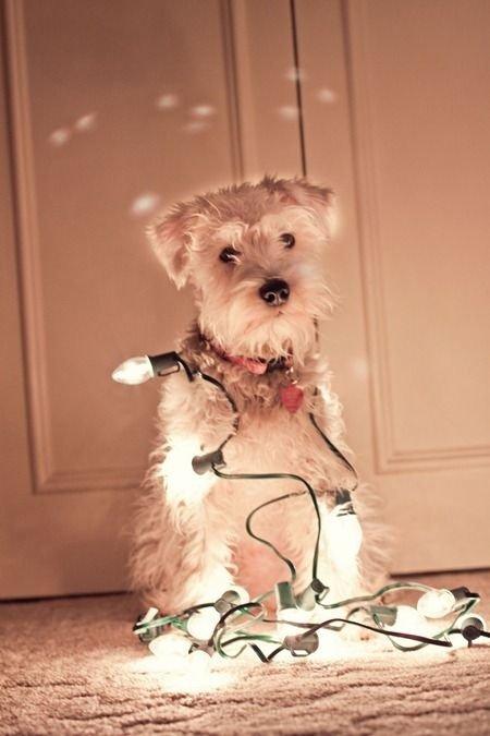 Izzy's 1st Christmas Photo