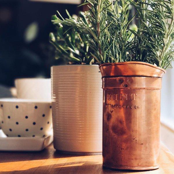 flowerpot, cup, cup, metal, ceramic,