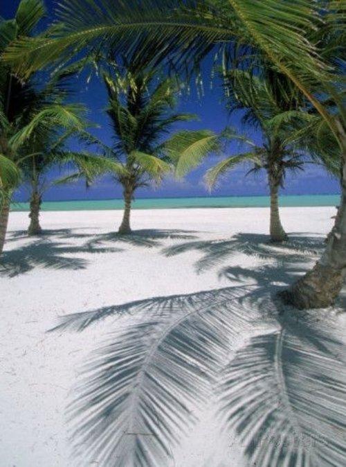 tropics, caribbean, palm tree, arecales, shore,
