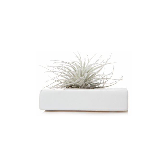 Chive Swayzak, Ceramic Flower Vase and Air Plant Holder
