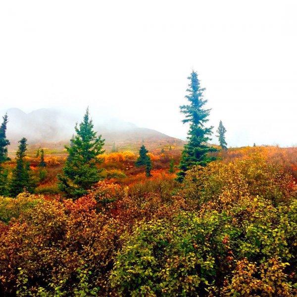 nature, vegetation, ecosystem, wilderness, leaf,