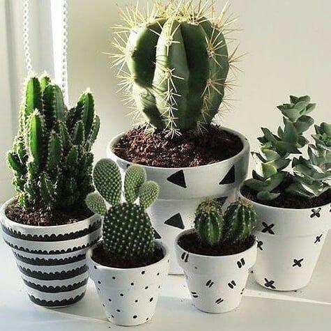 plant, cactus, flowerpot, hedgehog cactus, flowering plant,
