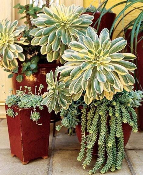 plant,flower,flower arranging,flora,floristry,