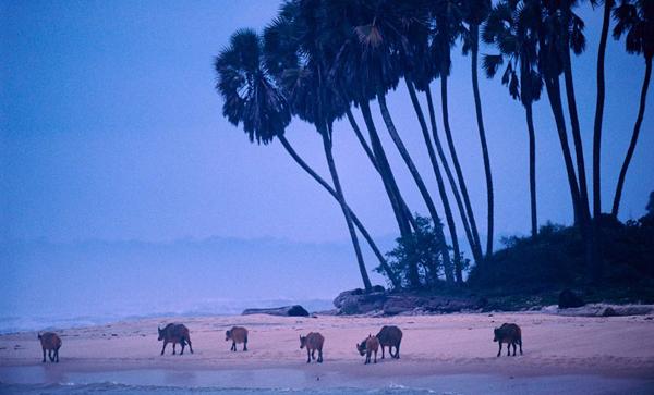 Loango National Park, Gabon