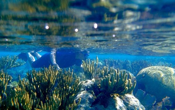 Snorkel the Reef in Belize