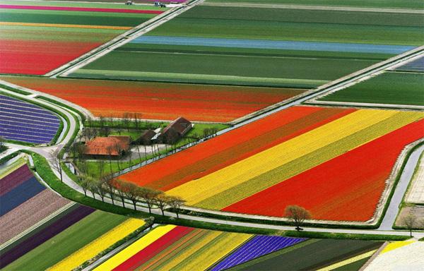 Tiptoe through the Tulips in Amsterdam, Holland