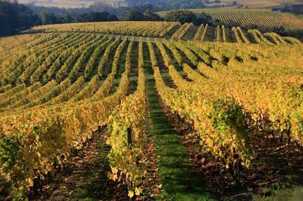 Wine Tour of Pays De La Loire