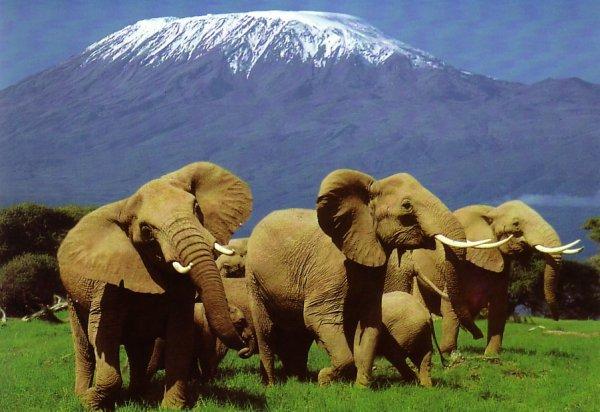 Mount Kenya National Park, Kenya