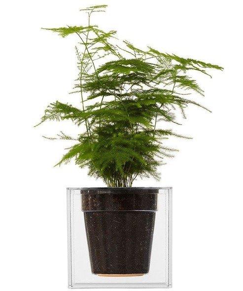 Cube Clear Plant Pot