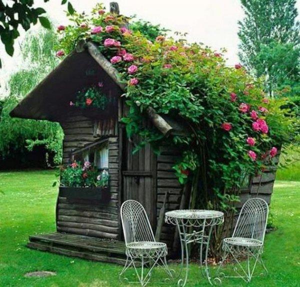 flower,outdoor structure,cottage,garden,yard,