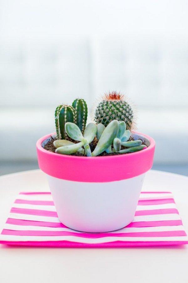 plant,land plant,flowering plant,cactus,flower,