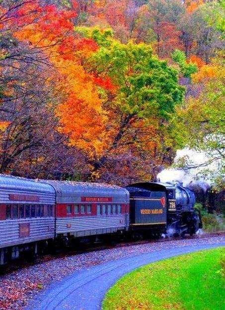 nature, leaf, track, transport, tree,