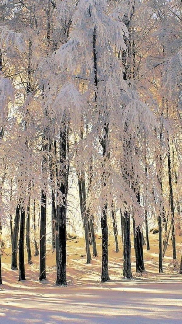 Feathery Trees