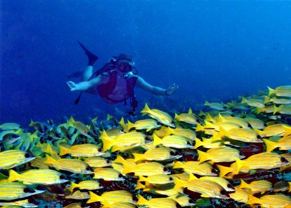 Banana Reef, Maldives