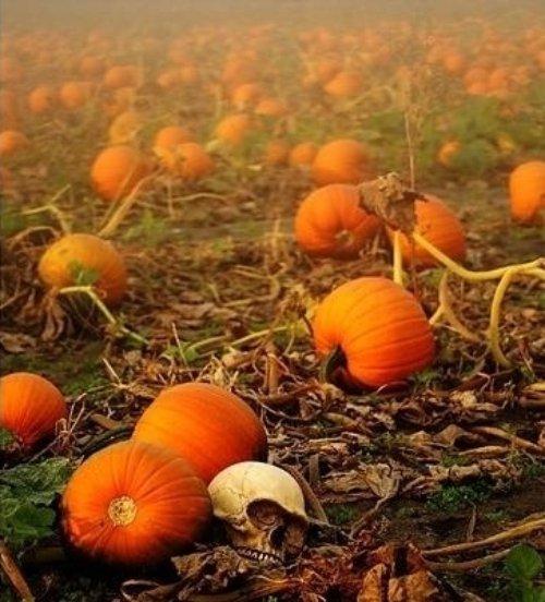Go to a Pumpkin Patch