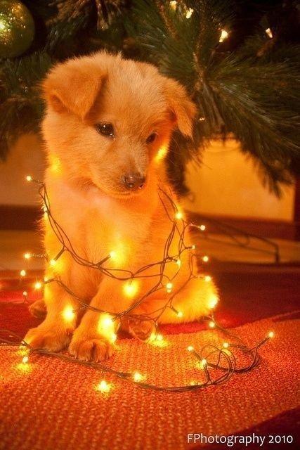 dog,mammal,dog like mammal,christmas,christmas decoration,