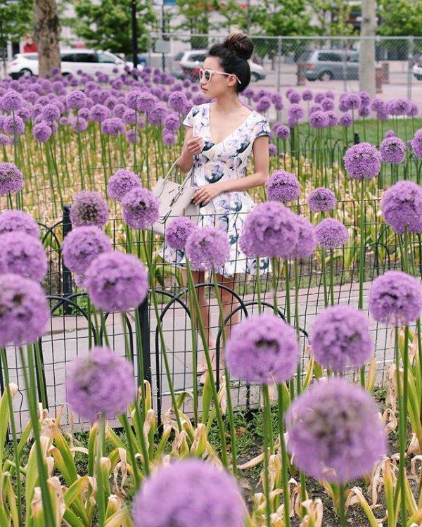 plant, flower, lavender, purple, lilac,