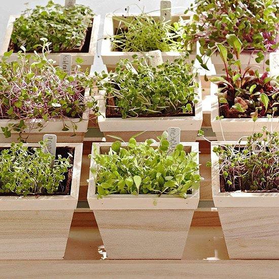 plant,botany,flower,floristry,garden,