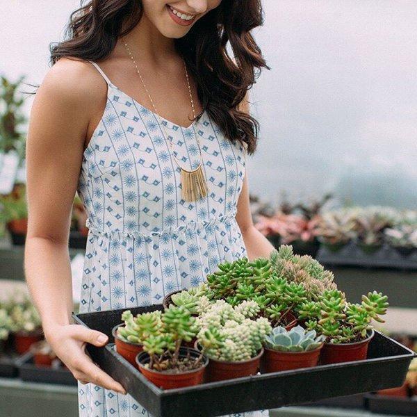 floristry, plant, flower,