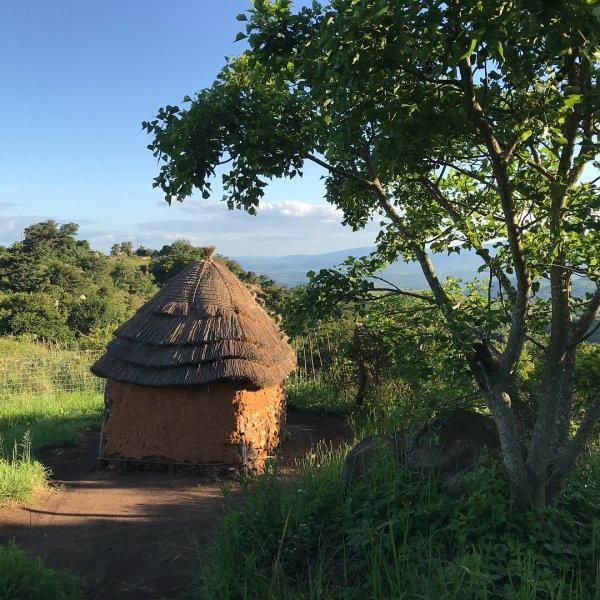 hut, tree, nature reserve, biome, sky,
