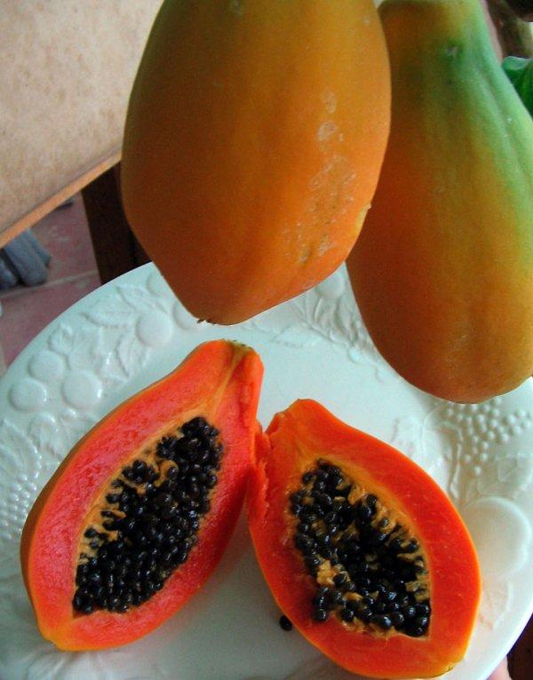 papaya,food,fruit,produce,plant,