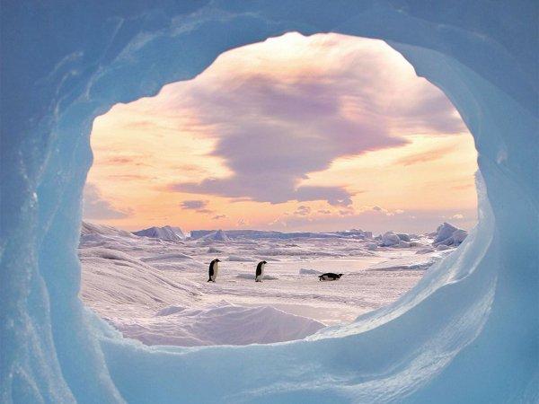 Freeze Frame by Keith Szafranski