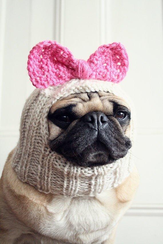 Hello Doggie?!