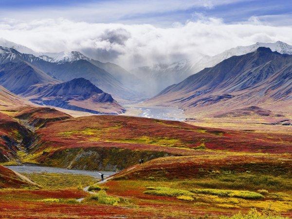 Try Not to Get Eaten in Denali National Park, Alaska