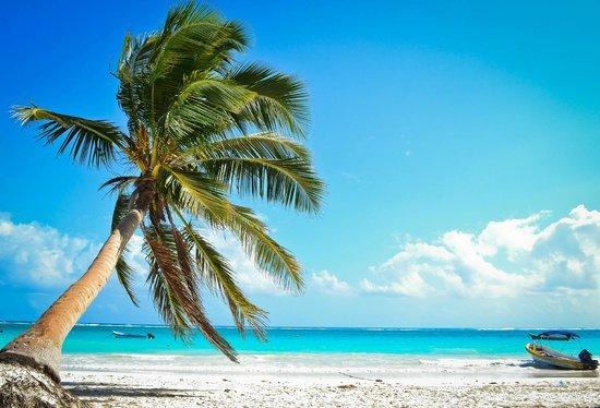 beach, sea, caribbean, tree, ocean,