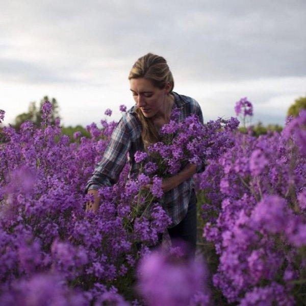 flower, lavender, purple, lilac, plant,