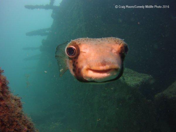 marine biology, underwater, fish, biology, reef,