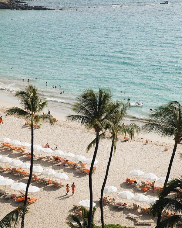beach, body of water, sea, shore, arecales,