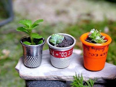 plant,food,produce,land plant,herb,