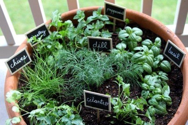 Tiny Herb Garden