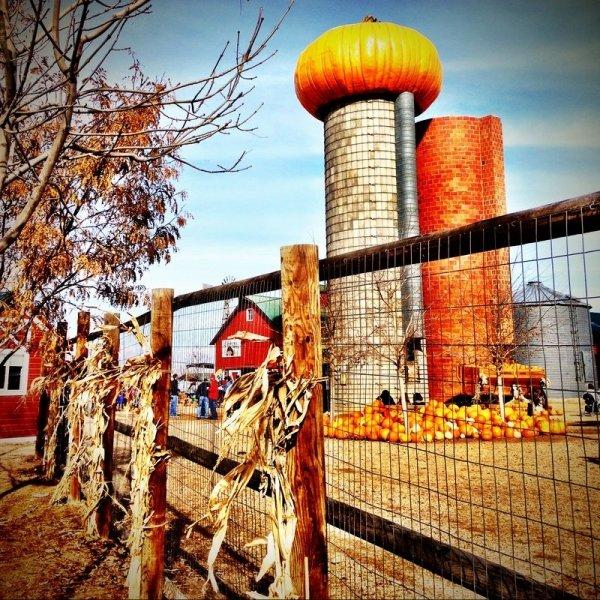 Anderson Farms, Erie, Colorado