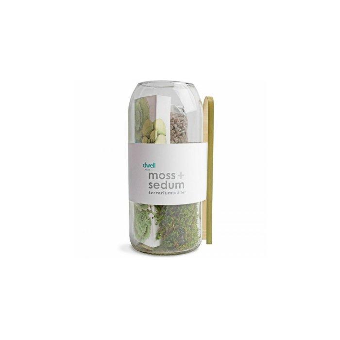 Moss + Sedum Vertical Terrarium Bottle