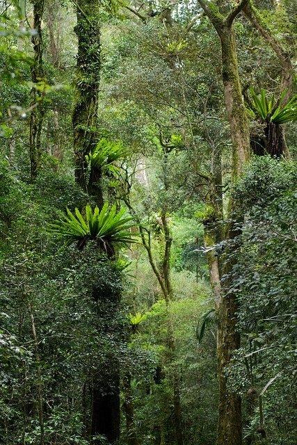 Mt. D'Ambre National Park