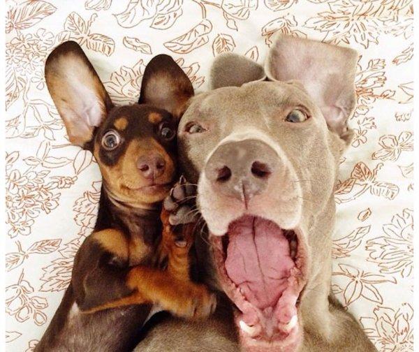 dog,mammal,dog breed,vertebrate,dog like mammal,