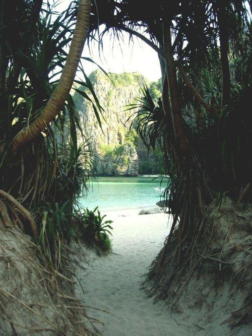 nature reserve, tree, arecales, tropics, palm tree,