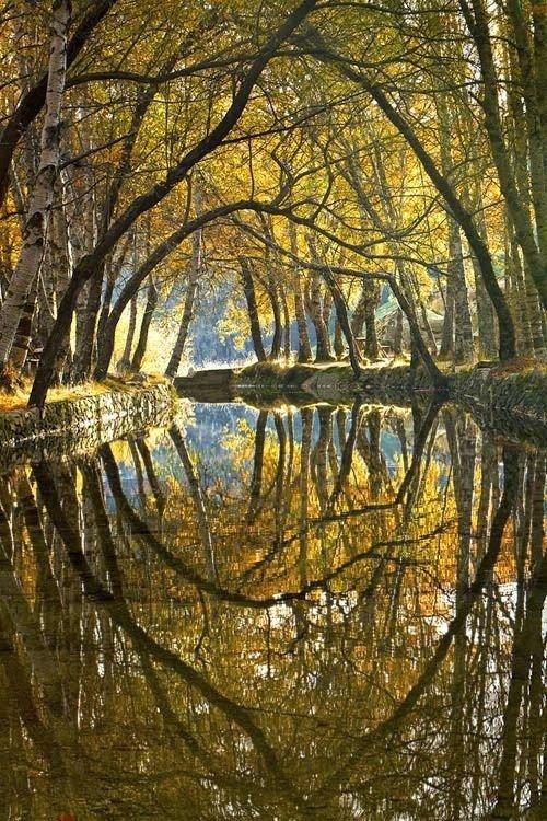 nature,reflection,tree,branch,season,