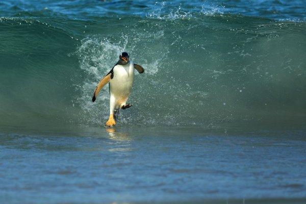 surfing, wave, ocean, sea, wind wave,