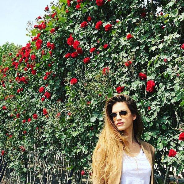 flower, plant, produce, flowering plant, fruit,