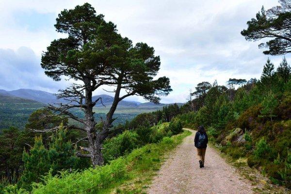 tree, path, wilderness, ecosystem, vegetation,