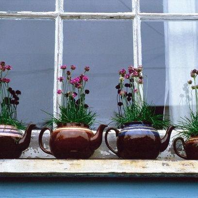plant,floristry,flower,window,flower arranging,